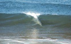 Delfín a la vista!